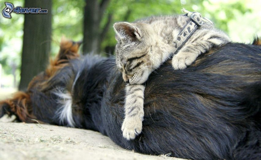 pes a mačka, spiaca mačka, spiaci pes