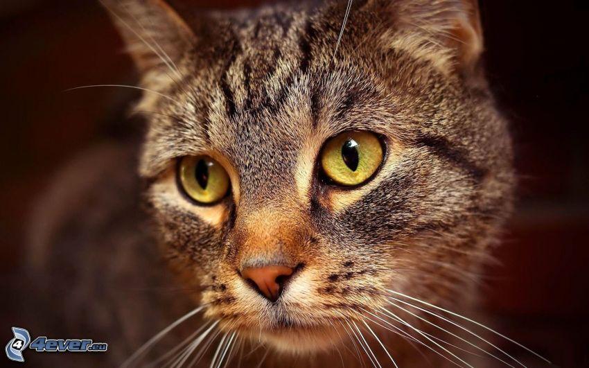 pohľad mačky