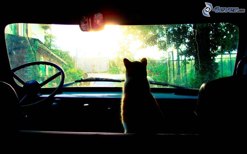 silueta mačky, auto, veterán