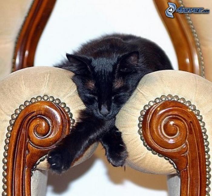 spiaca mačka, kreslo