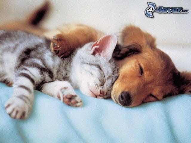 pes a mačka, spánok, objatie