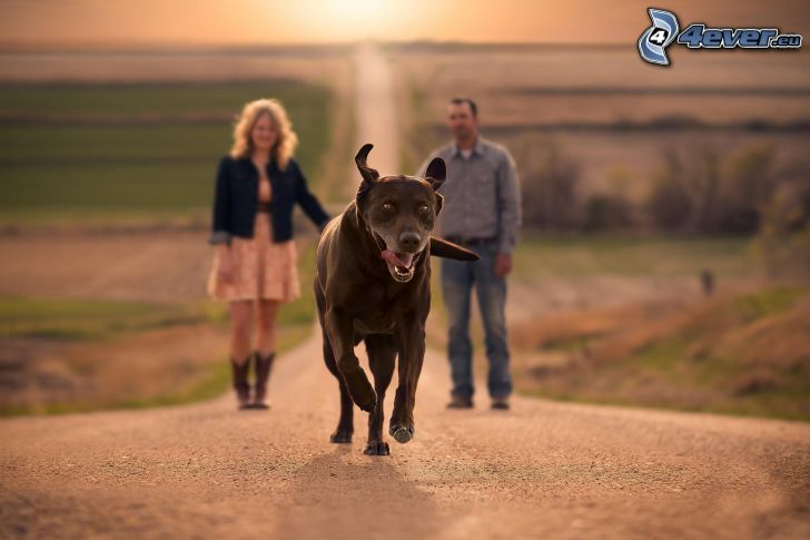 hnedý pes, muž a žena, rovná cesta, západ slnka