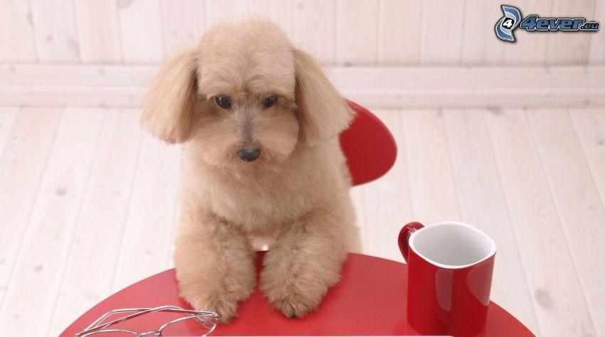 pes, hrnček, okuliare, stôl