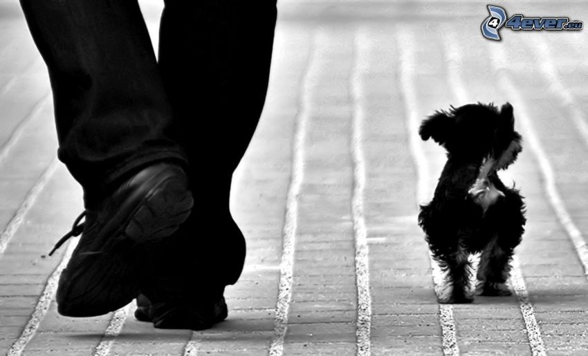 pes, nohy, chodník, čiernobiela fotka