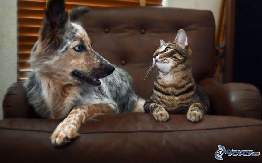 pes a mačka, kreslo