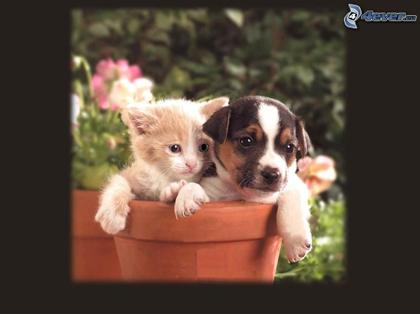 pes a mačka, kvetináč