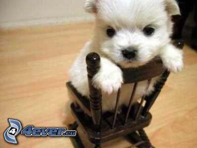 šteňa, kreslo
