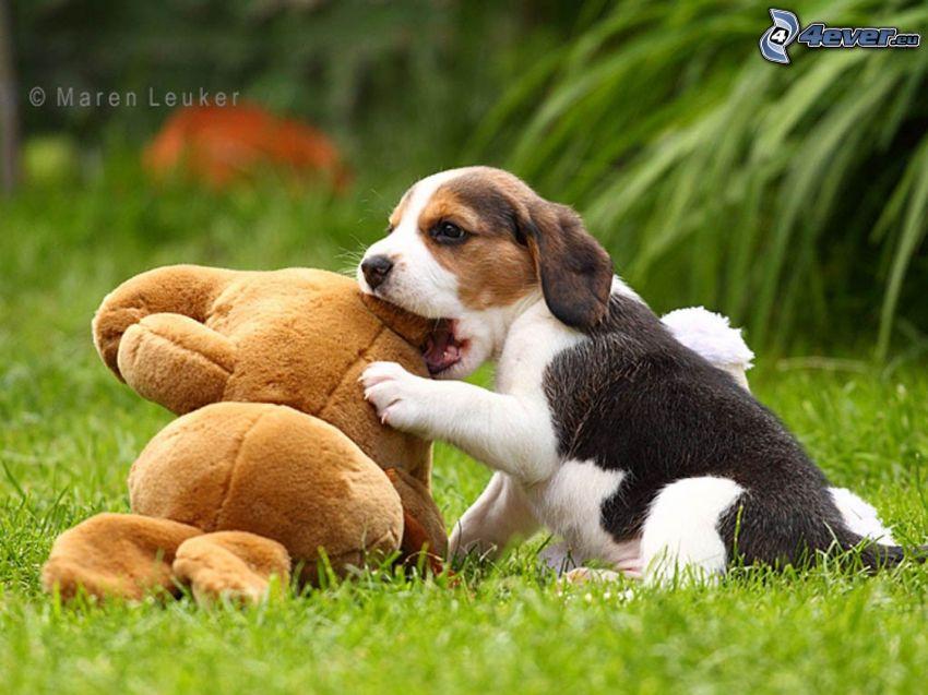šteniatko bígl, plyšová hračka, hra