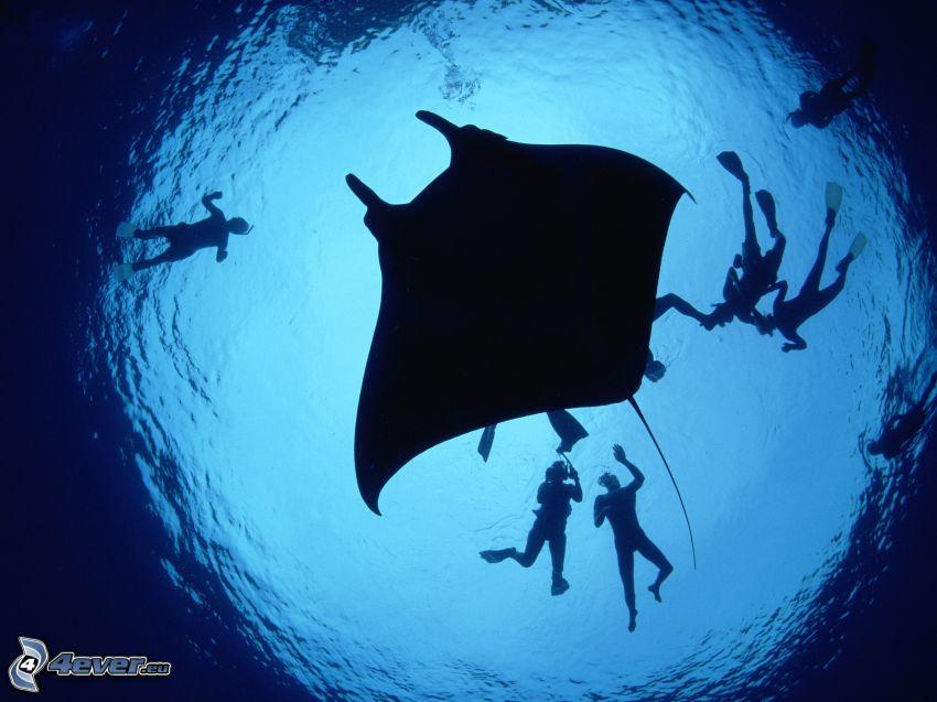 raja, potápači, siluety