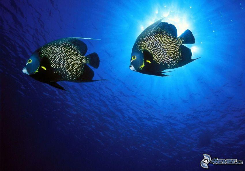 ryby v mori