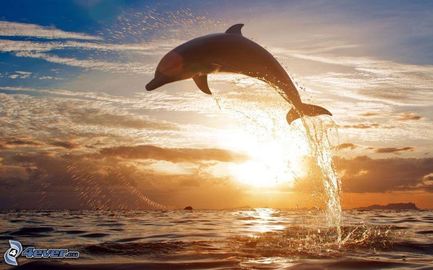 skákajúci delfín, západ slnka za morom