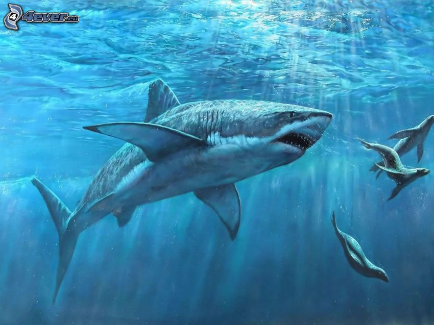 žralok, tulene