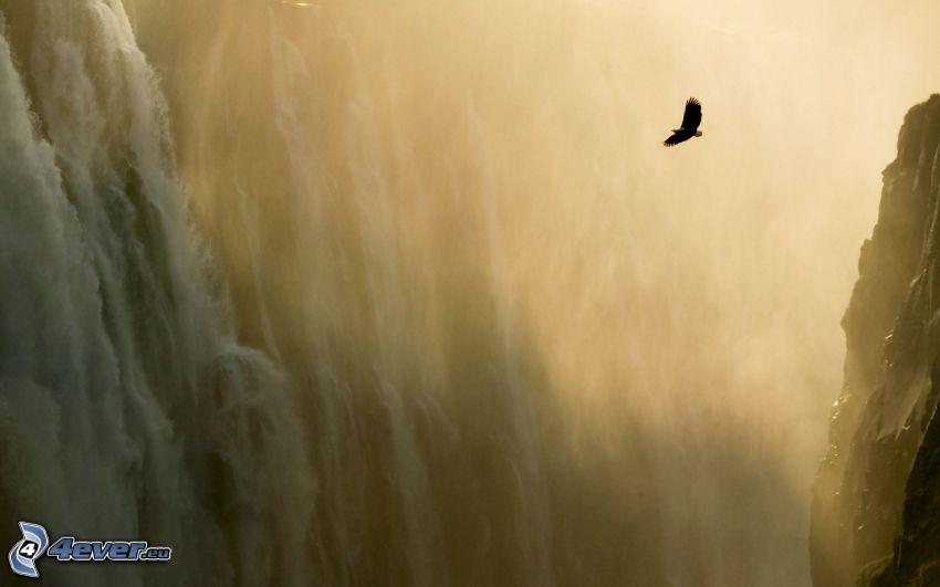 dravý vták, let, vodopády