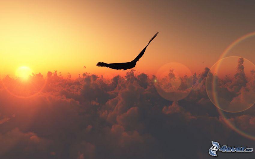 dravý vták, západ slnka nad oblakmi, silueta vtáčika