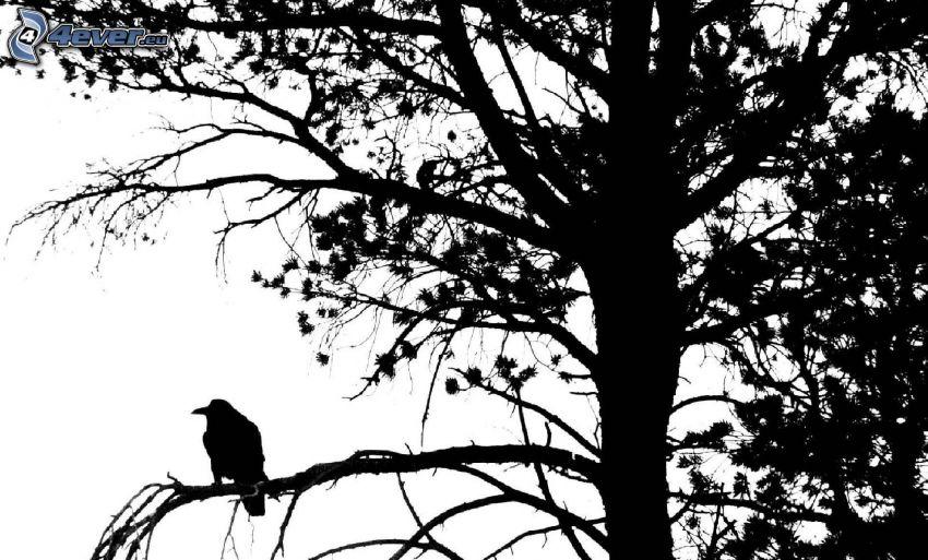 vrana, silueta vtáčika, silueta stromu