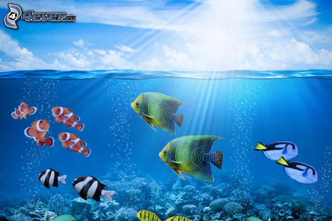 coral reef fish, water surface, sunbeams