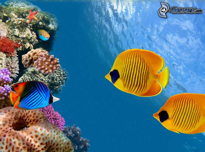 Coral reef fish yellow - photo#5