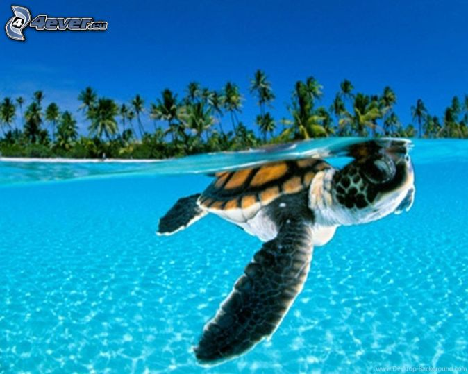 marine turtle, palm trees
