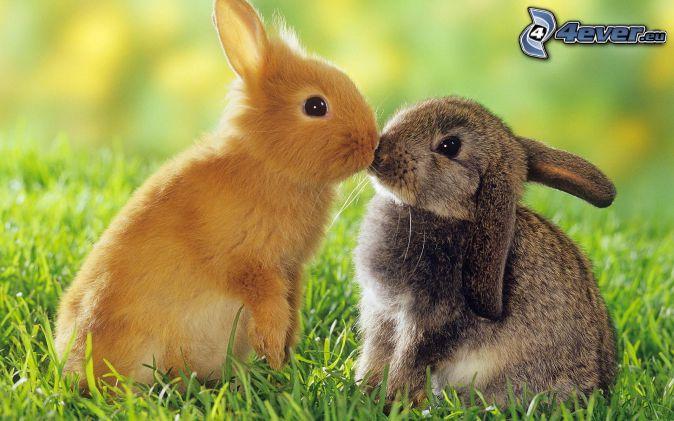 bunnies, kiss