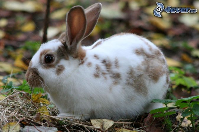 spotted bunny
