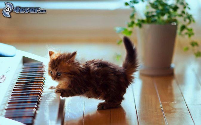 Hairy Kitten 33