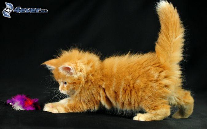 rusty kitten, feathers