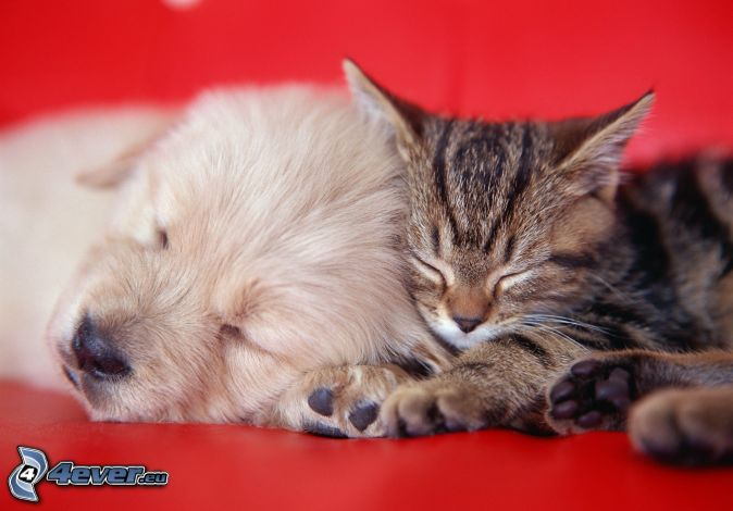 dog and cat, sleeping dog, sleeping cat, puppy, kitten
