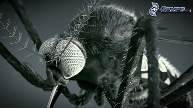 mosquito, macro, black and white photo