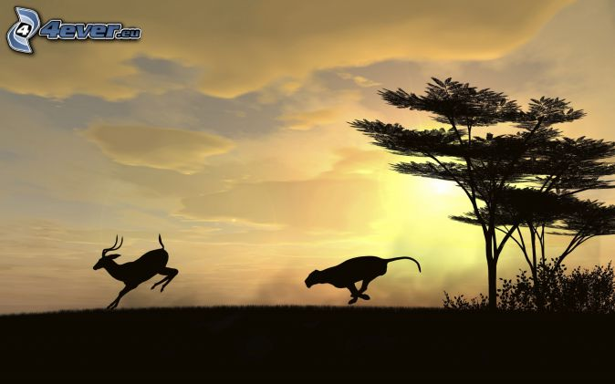 cougar, Sable Antelope, silhouette, silhouette of tree