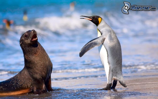 seal, penguin