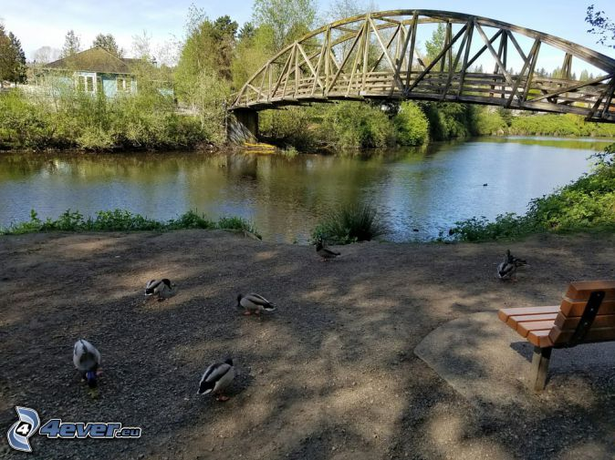Bothell Bridge, River, bench, ducks, house