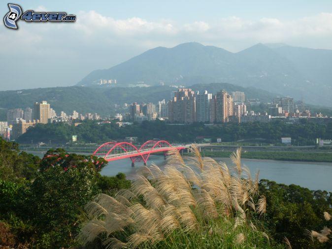 Guandu Bridge, high grass, skyscrapers