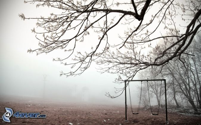 swings, branches, trees, fog