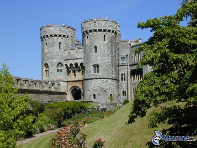 Windsor Castle, trees, pink roses