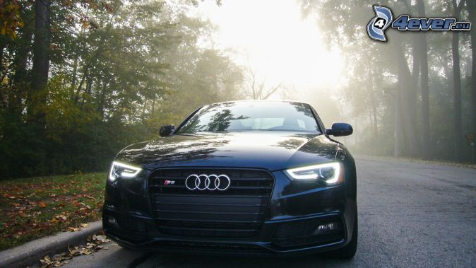 Audi S6, road through forest