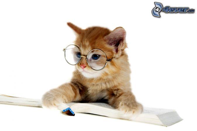 brown kitten, glasses, book