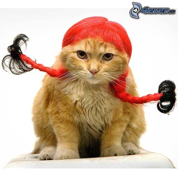 cat, wig