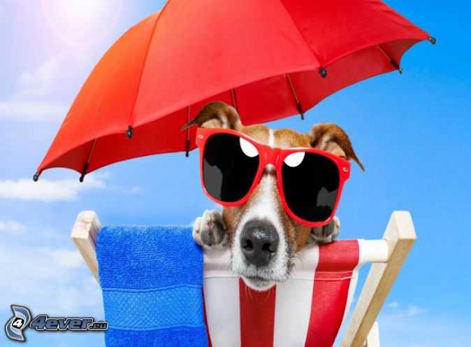 dog, sunglasses, parasol, deck chair