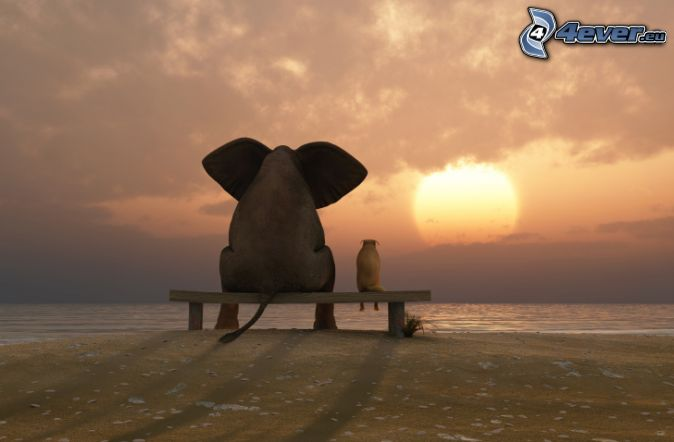 elephant, dog, bench, sunset