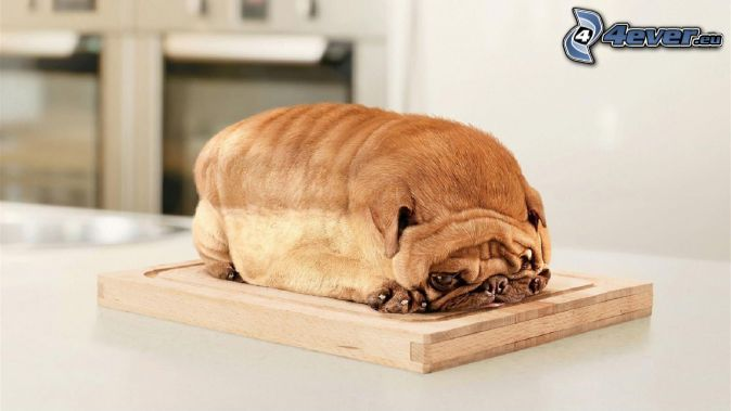 Shar Pei puppy, toast, board