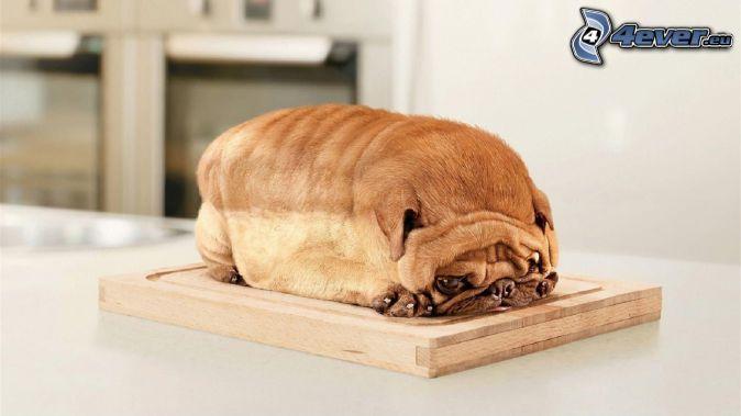 Shar Pei puppy, toast, board