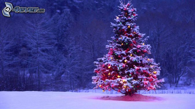 christmas tree, snowy trees