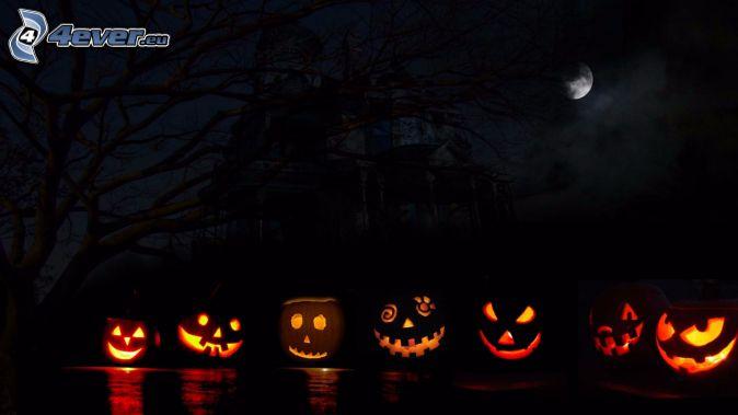 halloween pumpkins, night, moon