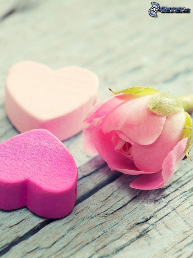hearts, pink rose