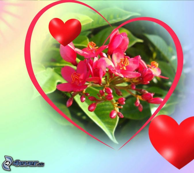 pink flowers, red hearts