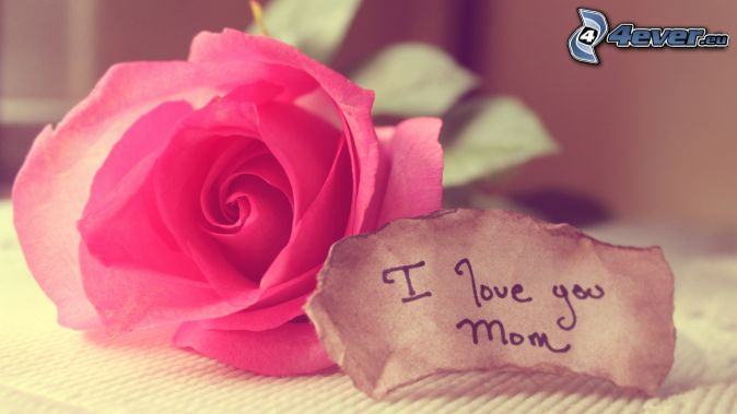I love you, mum, pink rose