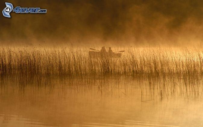 fishing, lake, boat, foggy morning