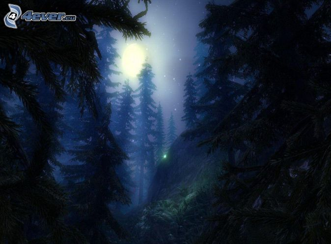 forest at night   coniferous trees   moonForest At Night With Moon