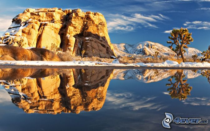 Joshua Tree National Park, lake, reflection, rock, tree