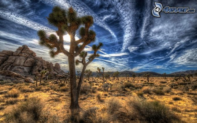 Joshua Tree National Park, trees, clouds, HDR